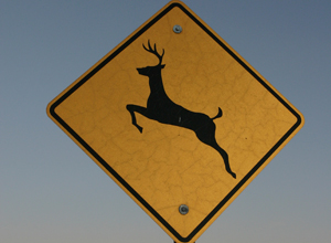 Deer Road Sign